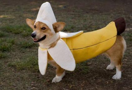 Собака в костюме банана