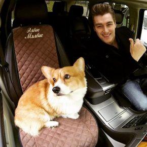 Алексей Воробьёв едет в машине с собакой