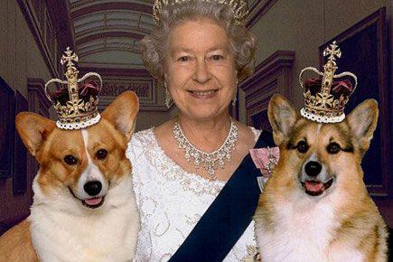Елизавета II с собаками вельш-корги