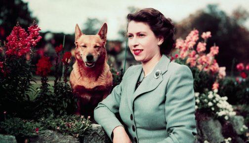Английская королева с собакой