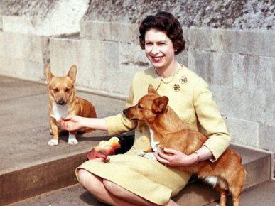 Английская королева с собаками