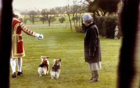 Елизавета II на прогулке с собаками