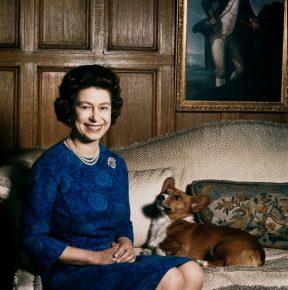 Королева с собакой на диване