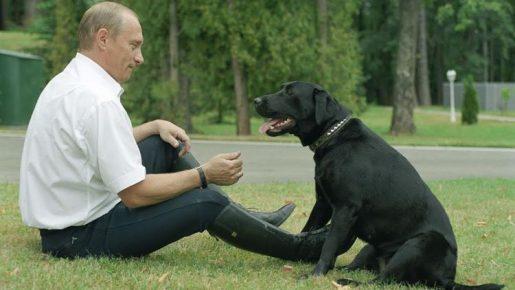 Путин с лабрадором