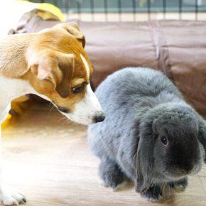 Джина и кролик