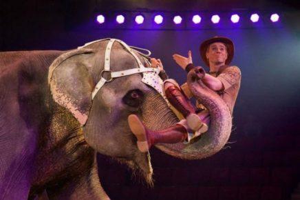 Слониха Ранго — звезда тюменского цирка