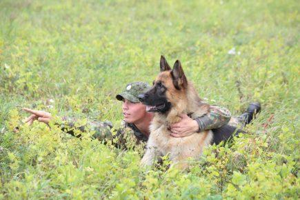 Служебные собак Росгвардии прошли переподготовку в Тюмени