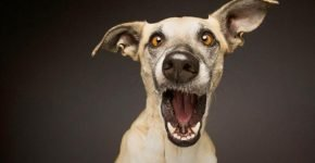 Смешные фото собак