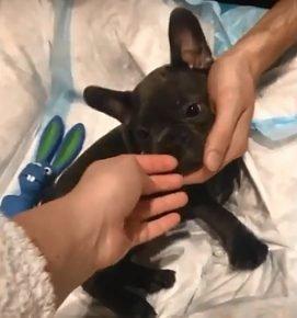 Собака Иды Галич