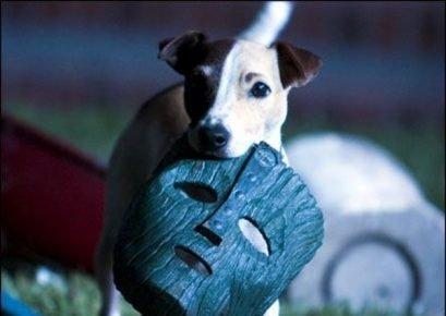 Собака с маской