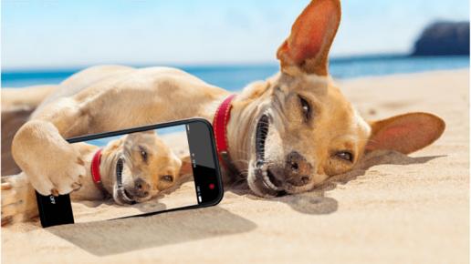 Собака с телефоном на пляже
