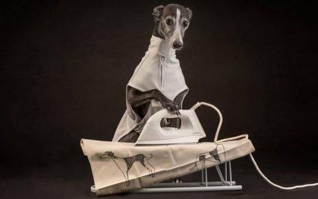 Собака с утюгом