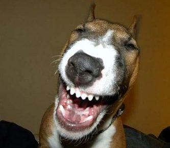 Собака смеётся