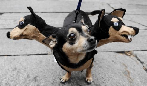 Собака в костюме Цербера