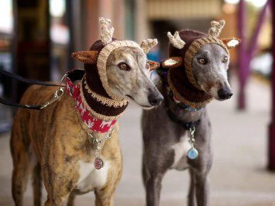 Собаки в костюмных шапках