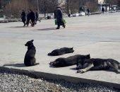 Солнце не щадит животных в Сибири