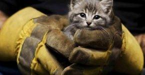 Спасённый пожарными котёнок