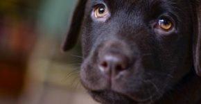 ТОП-10 самых добрых пород собак в мире