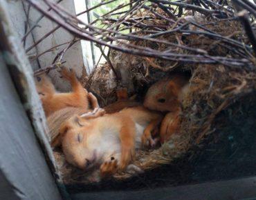 Три бельчонка остались на попечении в ДДТ Омска