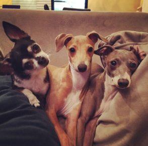 Три собаки Дженны Марблс