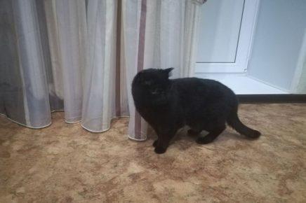 Тюменский кот два дня звал на помощь