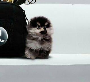 Собака Кима Тэхена
