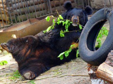 В Большереченском зоопарке включён режим «жара»