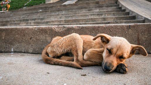 В Подмосковье запретят усыплять бездомных животных