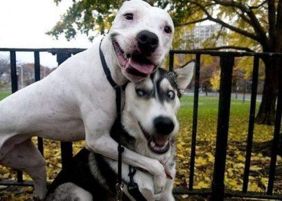 Весёлые собаки