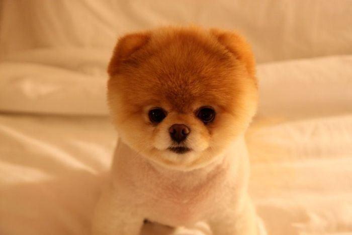 какая самая милая собачка в мире