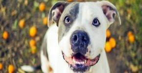 «Аллея славы» для собак и их хозяев