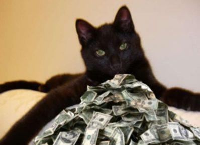 Кот Томмазо