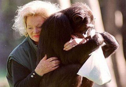 Шимпанзе Калу и её хозяйка
