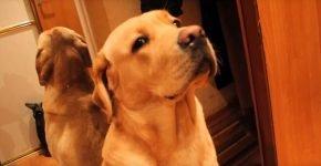 Хозяин ругает собаку — смешное видео