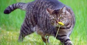 кошка Люси