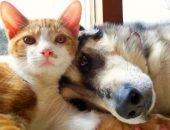 Кошки и собаки в добрые руки