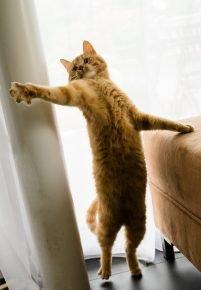 Кот пляшет