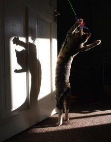 Серый полосатый кот танцует