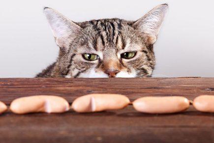 Кот ворует сосиски