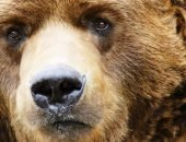 Медведи тоже хотят кушать