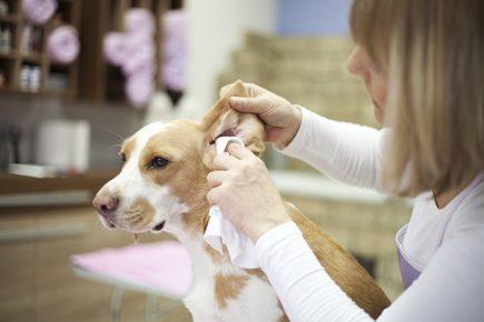 Очистка ушей собаки