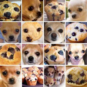 Собаки, похожие на еду
