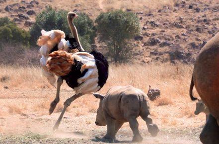 Страусы — самые тупые животные в мире