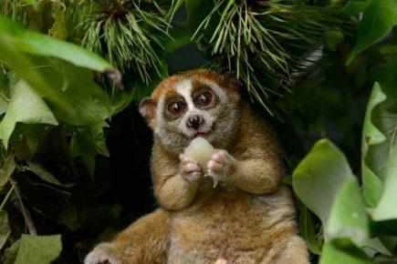 Самая тупая обезьяна в мире