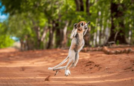 Самая тупая обезьяна в мире танцует