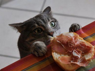 Кот ворует бутерброд