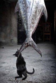 Котенок ворует огромную рыбу