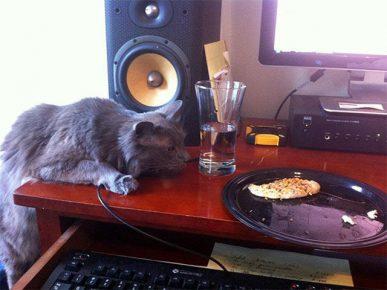 Кот лезет на стол