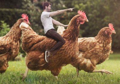 Мужчина на курице