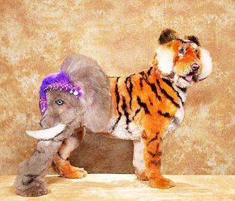 Собака со стрижкой под слона и тигра одновременно
